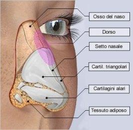 Anatomia della rinoplastica