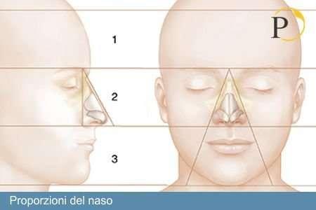 proporzioni del naso - Quale è un naso grosso?