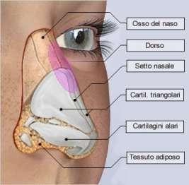 rinoplastica anatomia